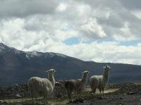 Altiplano - 109