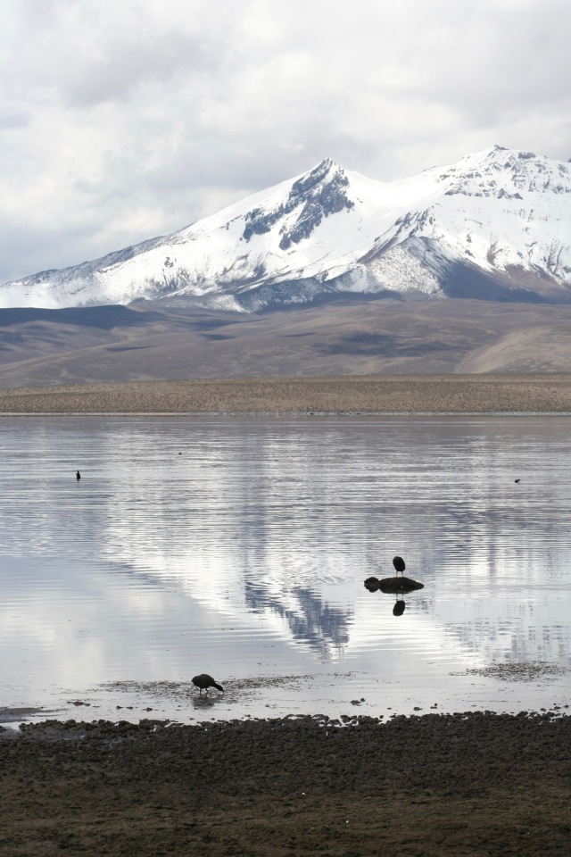 Altiplano - 150